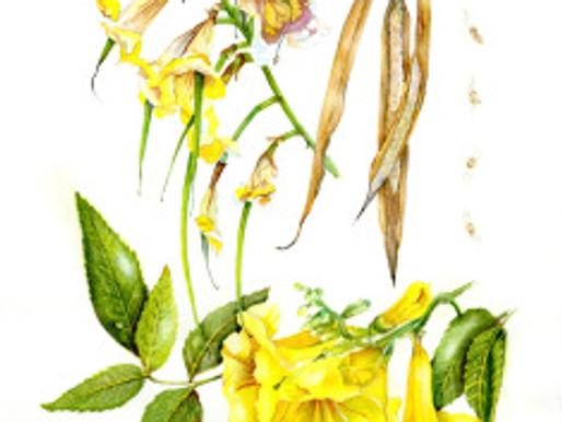 Botanical Art Workshop at Desert Art Center with Jude Wiesenfeld