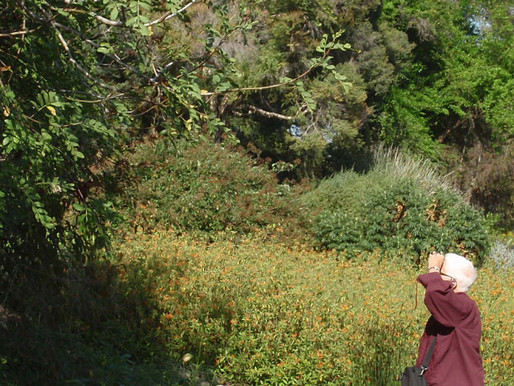 Margaret Best in 'The Florilegium,' the Royal Botanic Gardens Sydney