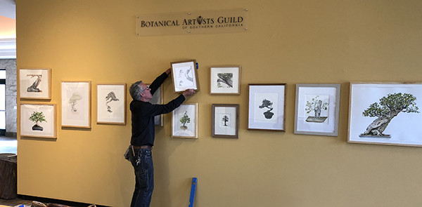 """Andrew Mitchell, The Huntington, hangs the final painting in the """"""""Portraits of Bonsai from The Huntington Collection"""" in the Brody Botanical Center. Photo © 2018, Olga Ryabstova."""