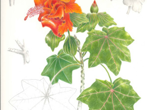 """Opening of """"Totally Tropical,"""" a BAGSC Exhibition at the San Diego Botanic Garden"""