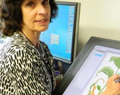 Alice Tangerini to Receive the Jill Smythies Award for Accomplishment in Botanical Illustration.