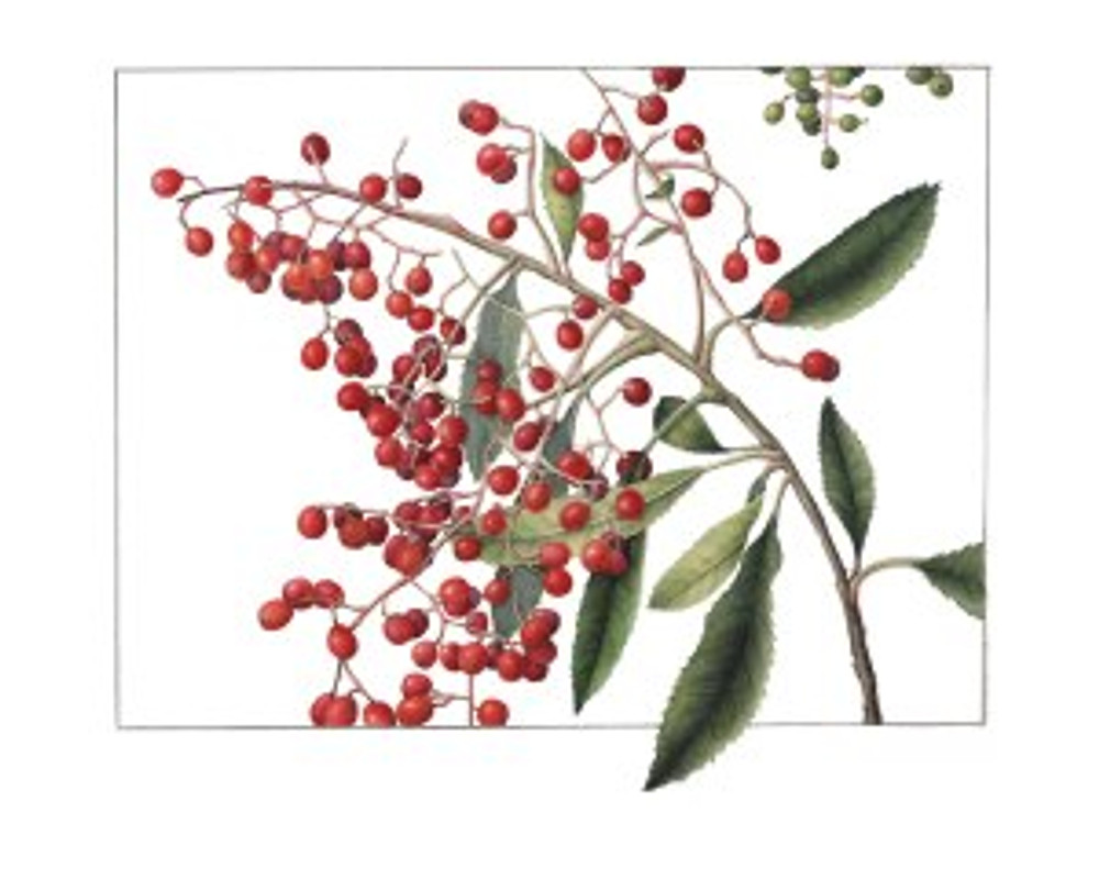 Toyon Berries, watercolor by Gilly Shaeffer, © 2016, all rights reserved.