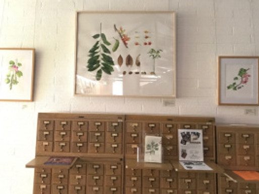 """BAGSC Exhibition: """"Illustrating the Urban Forest: 20 Years of Botanical Art"""" at the LA A"""