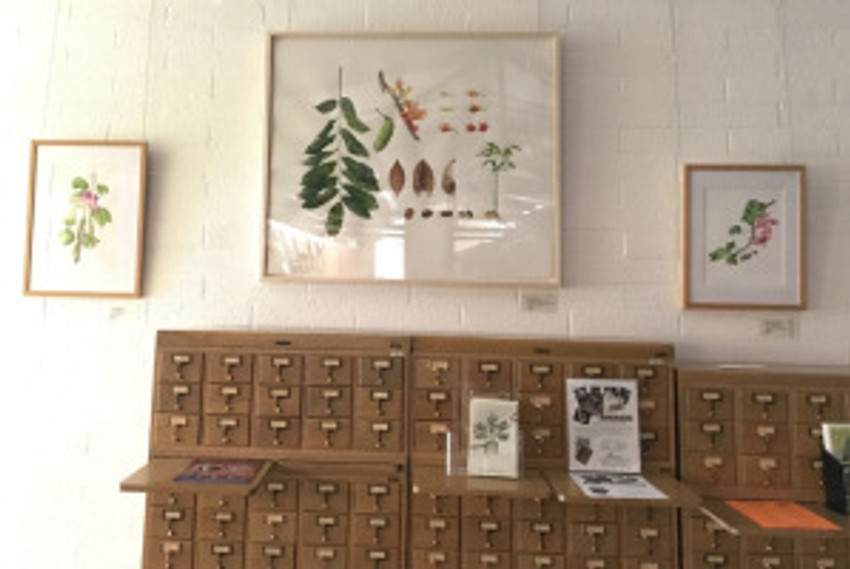 Artwork hanging above the card catalog in the Arboretum Library. Artists are: (L to R) Diane Nelson Daly, Deborah Shaw, and Estelle DeRidder. Photo by Janice Sharp, © 2017.