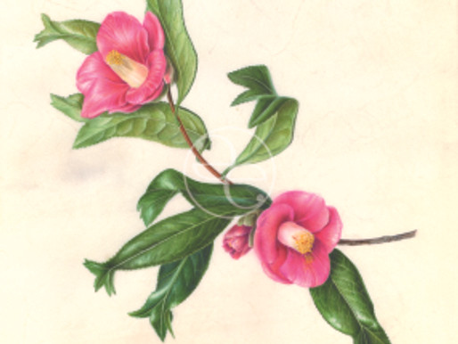 Akiko Enokido Accepted into the 18th Annual International Show of the American Society of Botanical