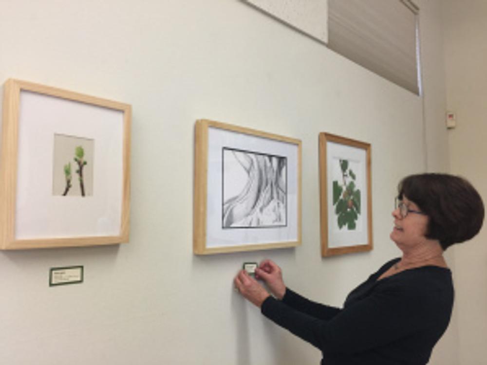 Janice Sharp placing labels throughout the exhibit. Photo by Olga Ryabtsova, © 2017.