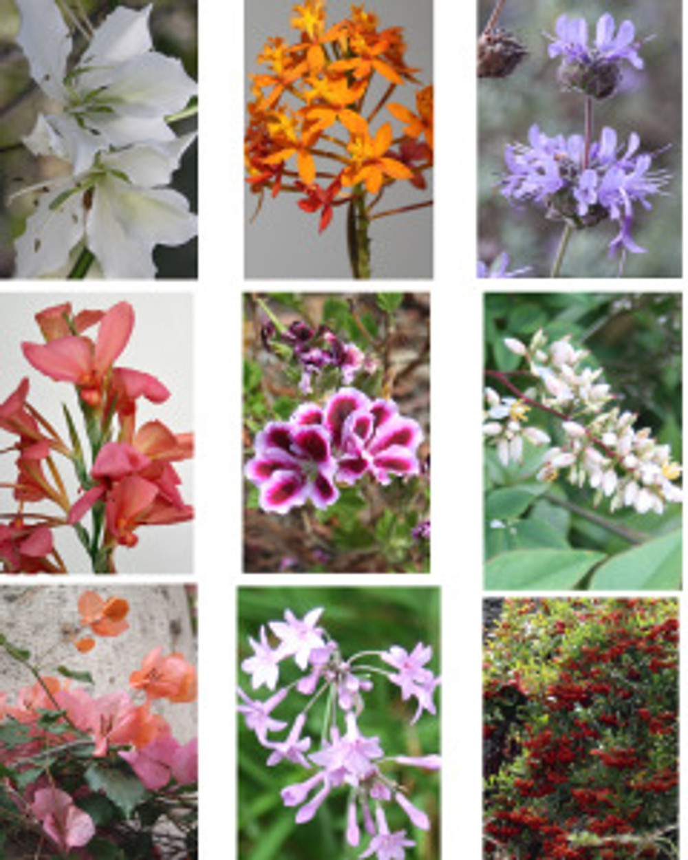 Flower images photographed by Lori Vreeke at the Santa Barbara Zoo, © 2015, all rights reserved.