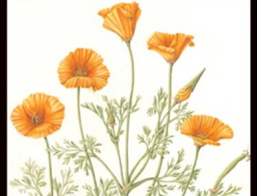 An Exhibition of Botanical Watercolors by Joan Keesey at Theodore Payne