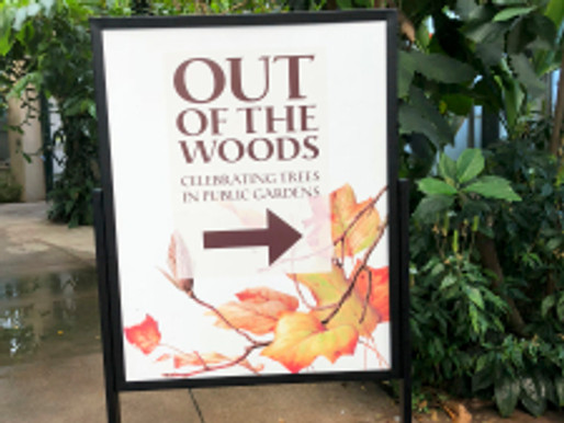 """Out of the Woods"" in the LA Times"