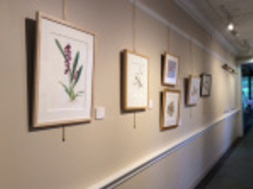 BAGSC Members at the 18th Annual Botanical Art Exhibition at Filoli