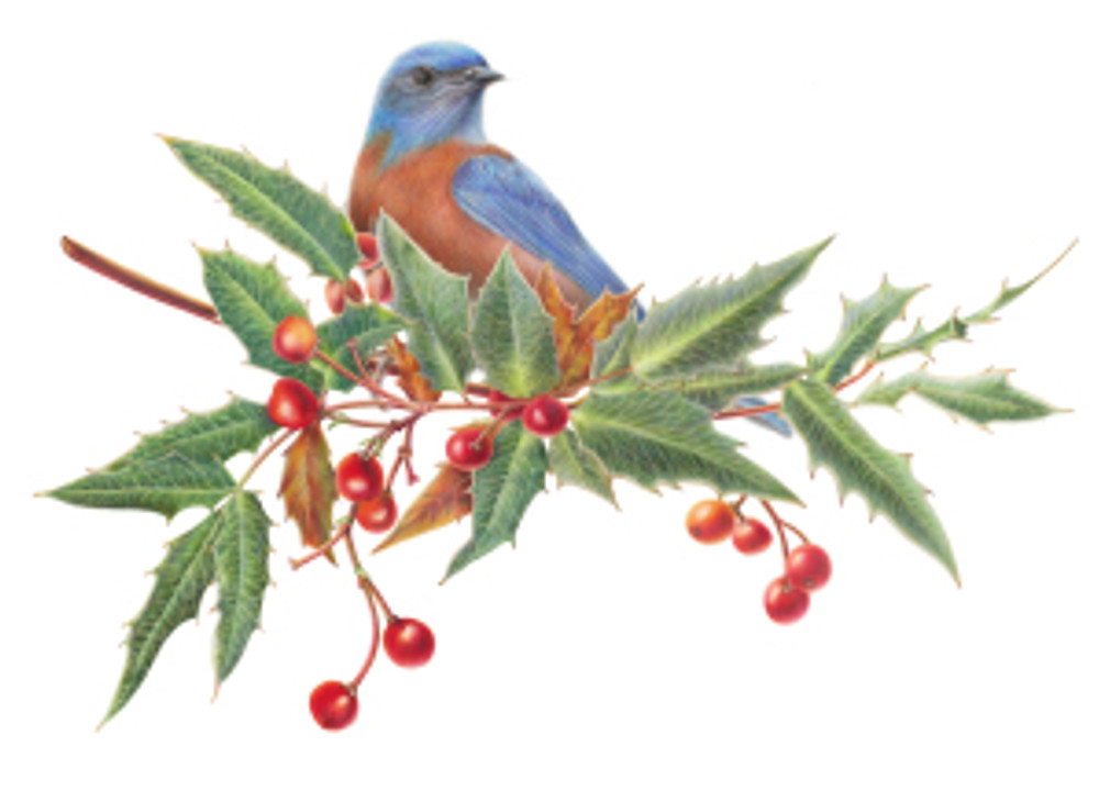 Nevin's Barberry with Bluebird, by Estelle DeRidder, © 2015, all rights reserved.