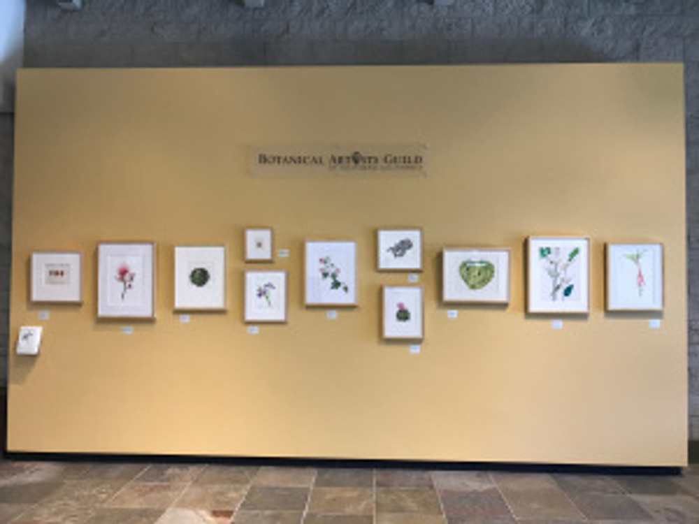 The exhibition wall faces the stairway in the Brody Botanical Center. The BAGSC logo is a permanent sign, and information about BAGSC and ASBA is available as a handout. Photo by Janice Sharp, © 2017.