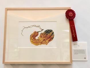 People's Choice second place award went to Lori Vreeke's, Field Pumpkin, Cucurbita pepo var.  ovifera, colored pencil on paper, © 2015 Lori Vreeke, all rights reserved.