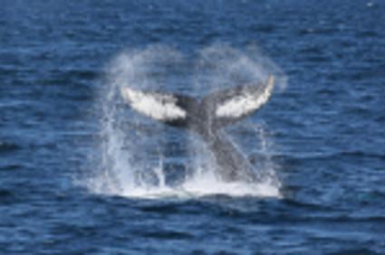 Whale flute.