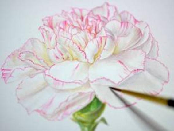 Multi-petalled flower, watercolor work in progress. © 2014, Akiko Enokido.