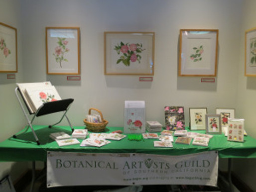 BAGSC Exhibits Botanical Camellia Art at Descanso Camellia Flower Show