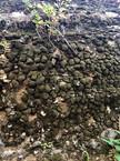 moss on stones.jpeg