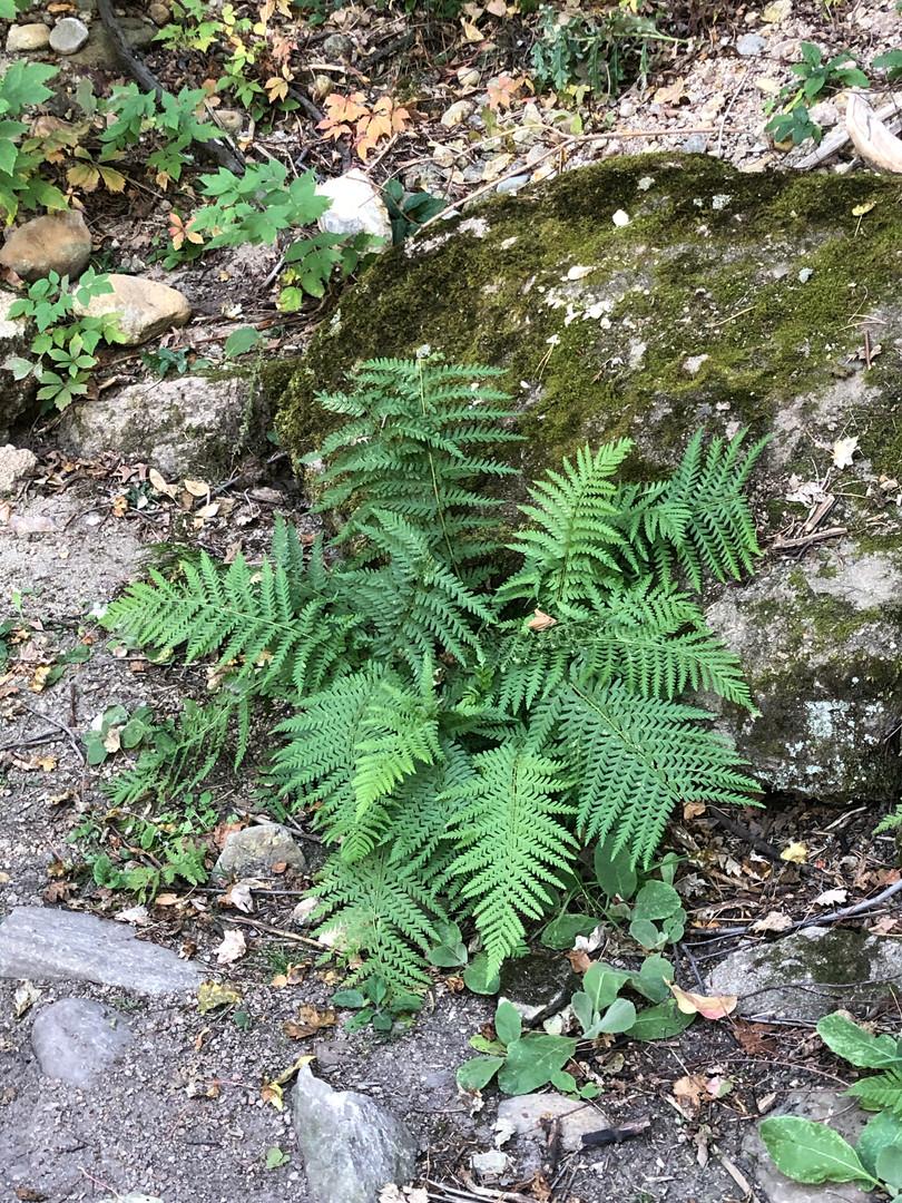 Sept 27 hike (40).JPG