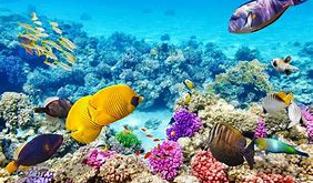 The Great Barrier Reef - A Coral Reef Ecosystem in Danger