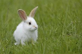 rabbit_2D002D00_20.jpg
