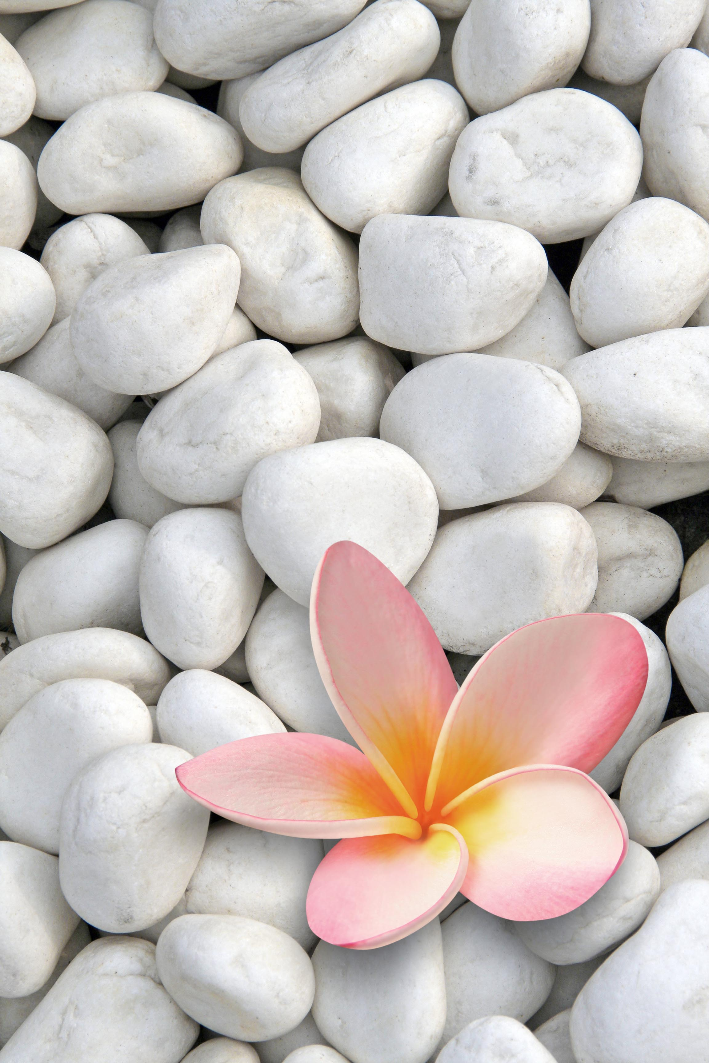 Frangipani Stones.jpg