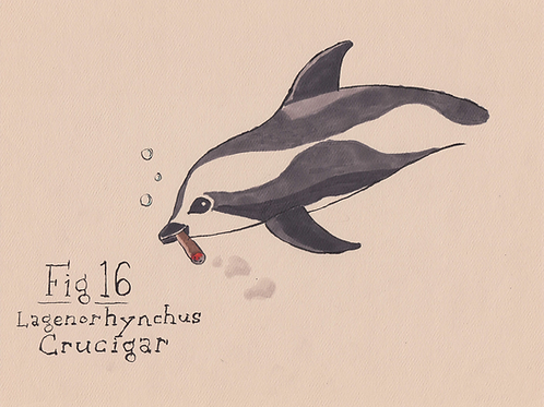 Fig. 16 Lagenorhynchus Crucigar (Original)