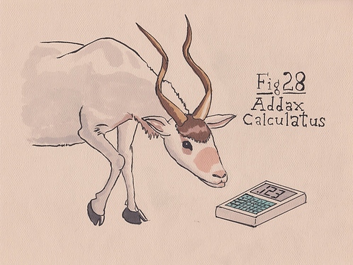 Fig. 28 Addax Calculatus (Original)