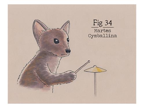 Fig. 34 Martes Cymballina (Print)