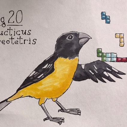 Sermonibus Animalis 20