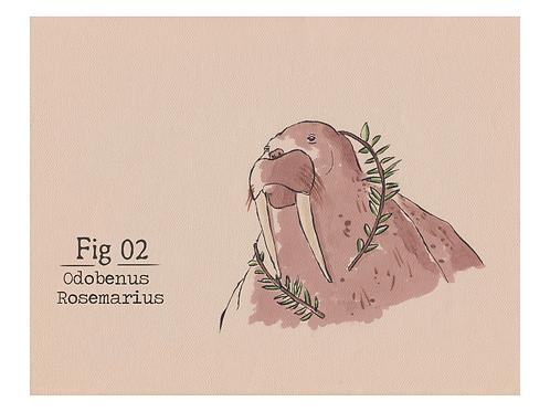 Fig. 02 Odobenus Rosemarius (Print)