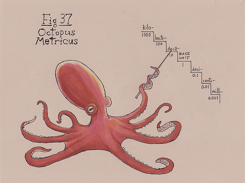Fig. 37 Octopus Metricus (Original)