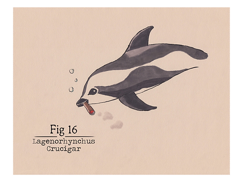 Fig. 16 Lagenorhynchus Crucigar (Print)