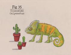 SA 35.jpg