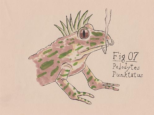 Fig. 07 Pelodytes Punktatus (Original)