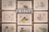 SHOP - SA - Prints.png