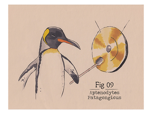Fig. 09 Aptenodytes Patagongicus (Print)