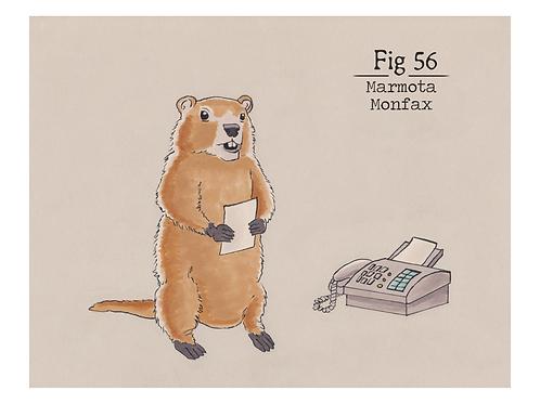 Fig. 56 Marmota Monfax (Print)