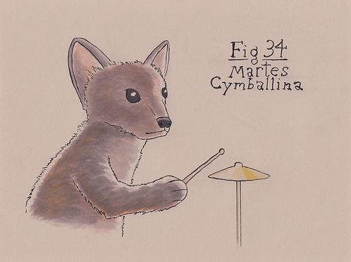 Fig. 34 Martes Cymballina (Original)