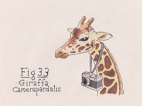 Fig. 33 Giraffa Camerapardalis (Original)