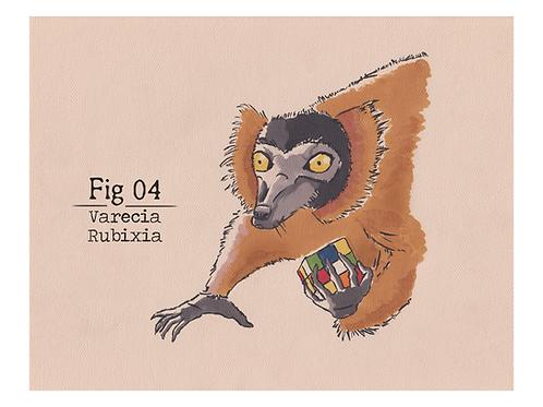 Fig. 04 Varecia Rubixia (Print)