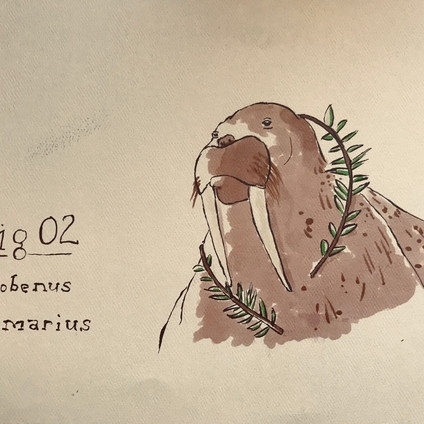 Sermonibus Animalis 02