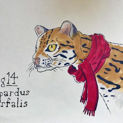 Sermonibus Animalis 14