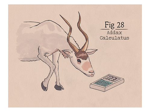 Fig. 28 Addax Calculatus (Print)