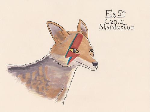 Fig. 54 Canis Stardustus (Original)