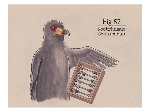 Fig. 57 Rostrhamus Sociabacus (Print)