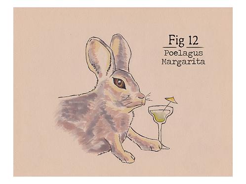 Fig. 12 Poelagus Margarita (Print)
