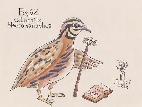 Fig. 62 Coturnix Necromandelica (Original)