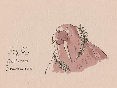 Fig. 02 Odobenus Rosmarius (Original)