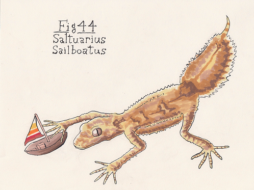 Fig. 44 Saltuarius Sailboatus (Original)