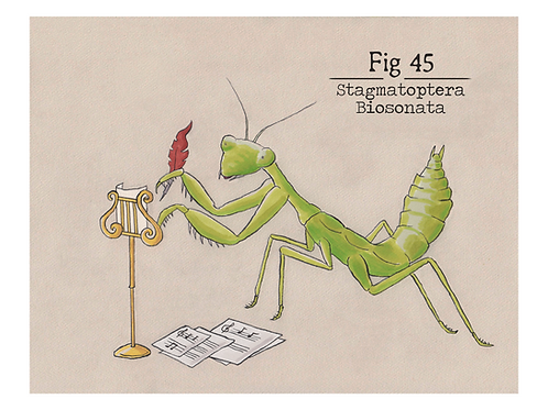 Fig. 45 Stagmatoptera Biosonata (Print)